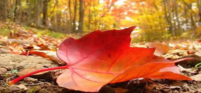 Vermezzo, sagra d'autunno