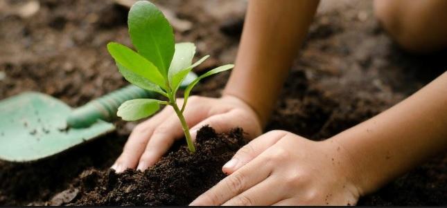 Per fare un albero ci vuole un hashtag: appuntamento a Cisliano il 6 aprile