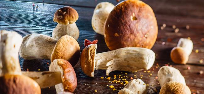 Sapore, musica e divertimento: la Gastronomia Raineri e la Sagra del Fungo Porcino di Motta Visconti